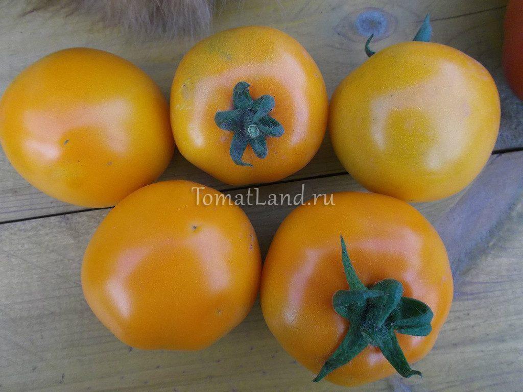 помидоры Жар птица фото