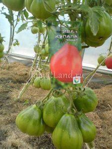 помидоры Иван Купала