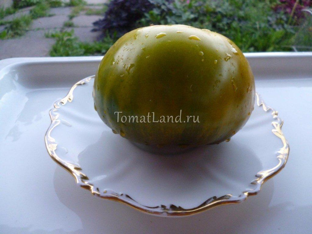 помидоры Лягушка царевна