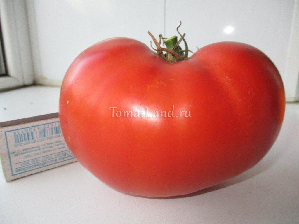 помидоры Линда f1 фото спелых плодов