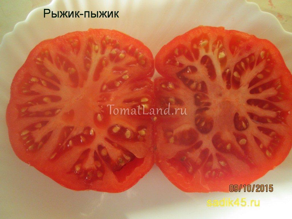 томат Рыжик-Пыжик фото в разрезе