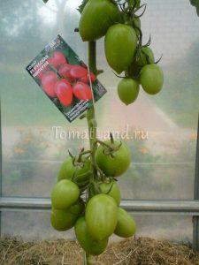 помидоры Русская империя
