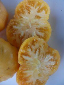 томат ананасный поросенок