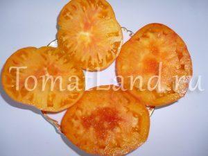 томат сорт Армянские