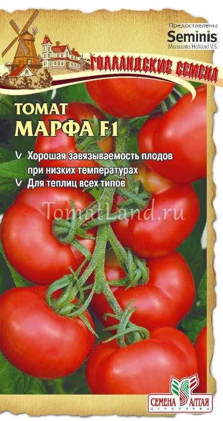томат марфа отзывы фото