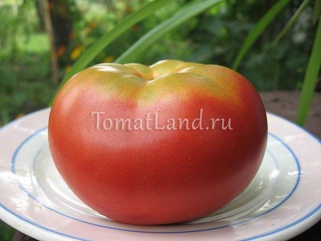 помидоры розовые щечки фото