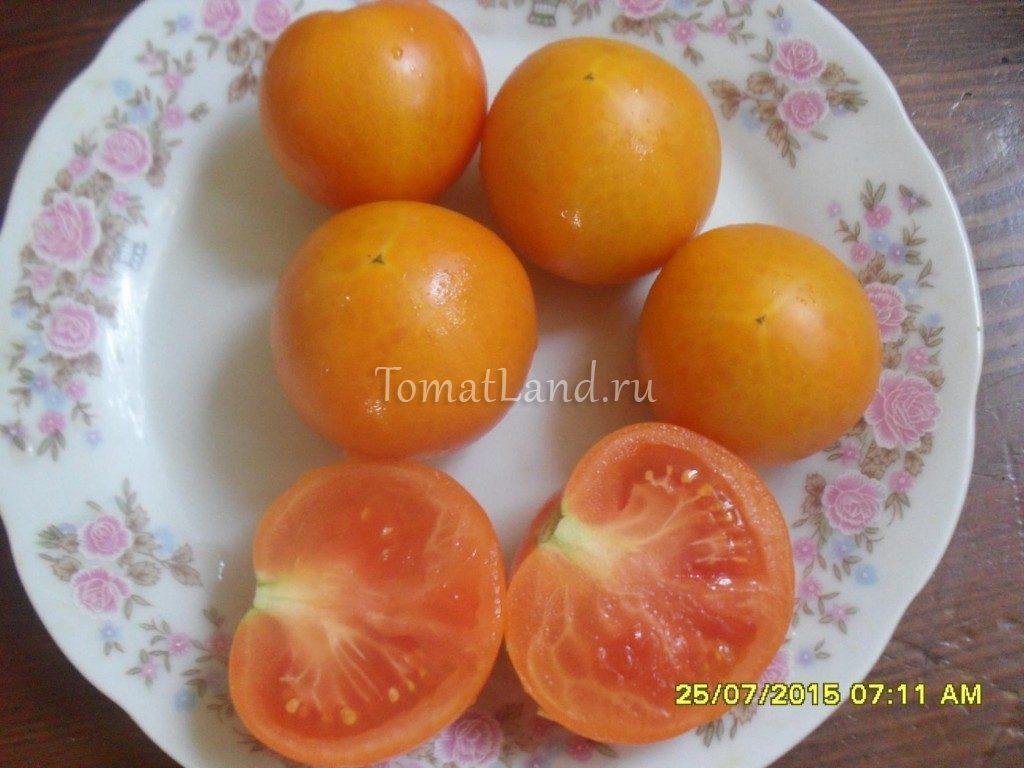 помидоры Златава фото