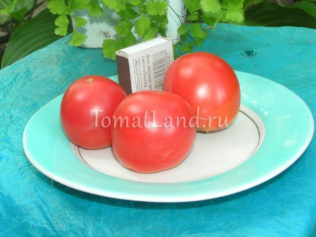 томат цунами фото