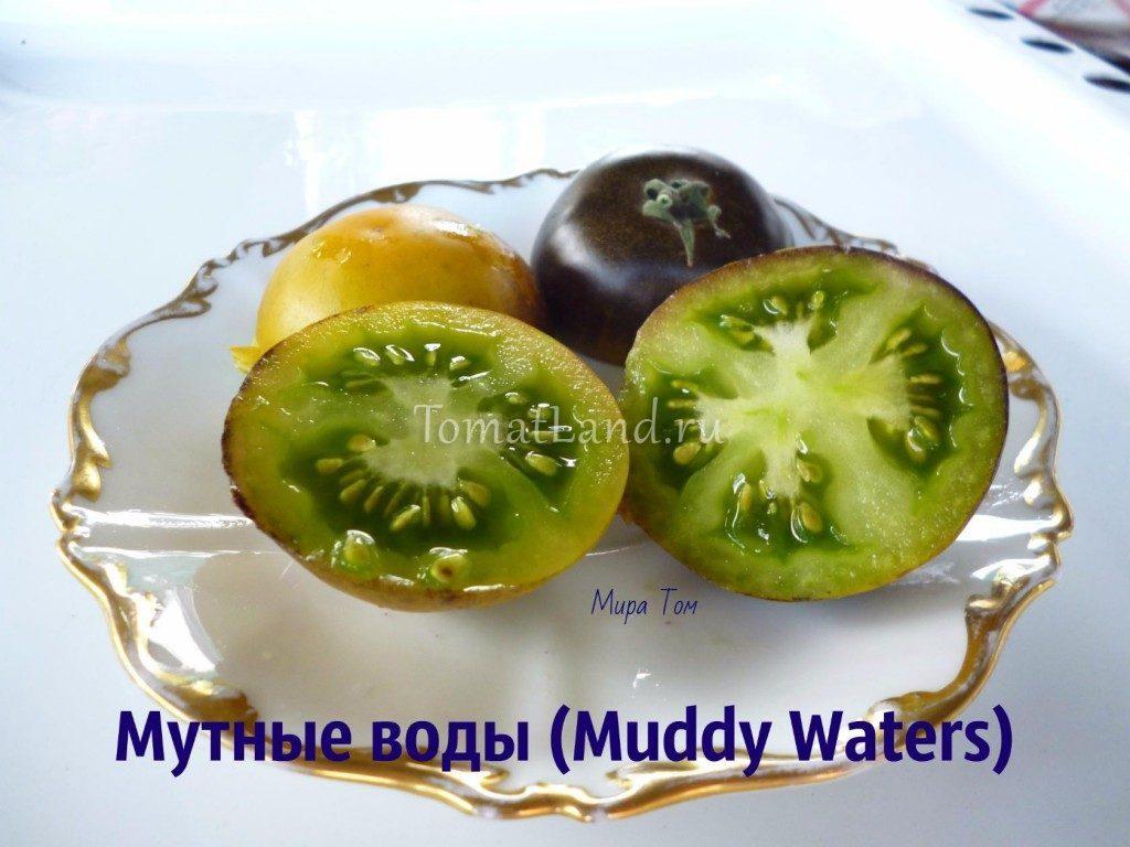 помидоры мутные воды фото спелых плодов