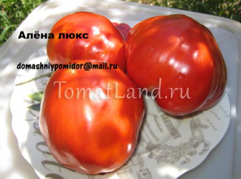томат Алена Люкс фото спелых плодов