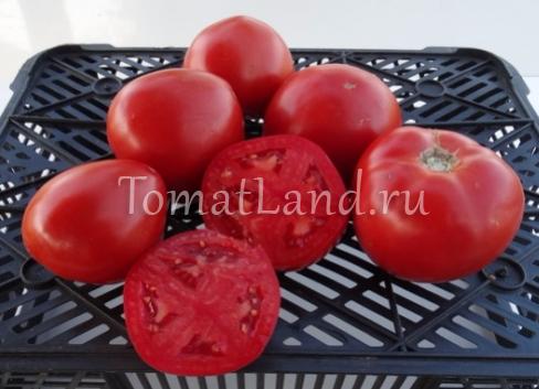 помидоры Большая мамочка фото спелых плодов