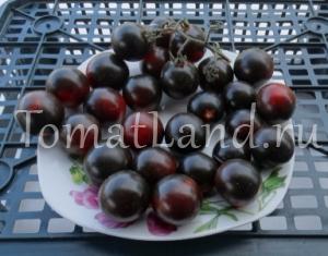 томат хельсинг распределительные