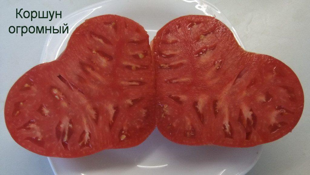 томат коршун огромный в разрезе