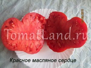томат Красное масляное сердце