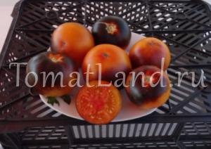 томат Оранж Блю