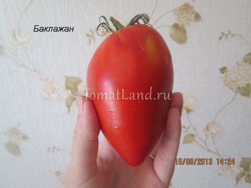 томат сорт Баклажан фото