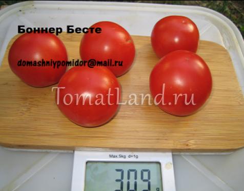 томат боннер бесте
