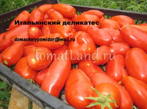 томат итальянский деликатес