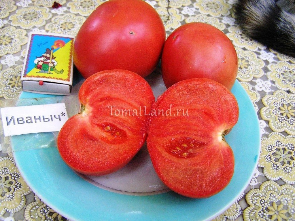 помидоры иваныч фото