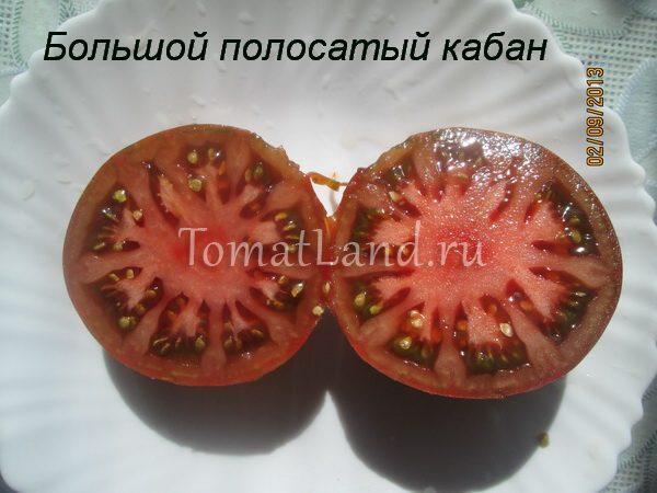 томат полосатый кабан