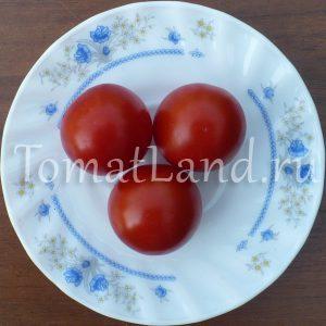 томат восторг садовода