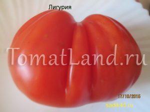 томат Лигурия