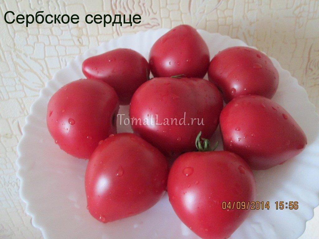 помидоры сербское сердце фото