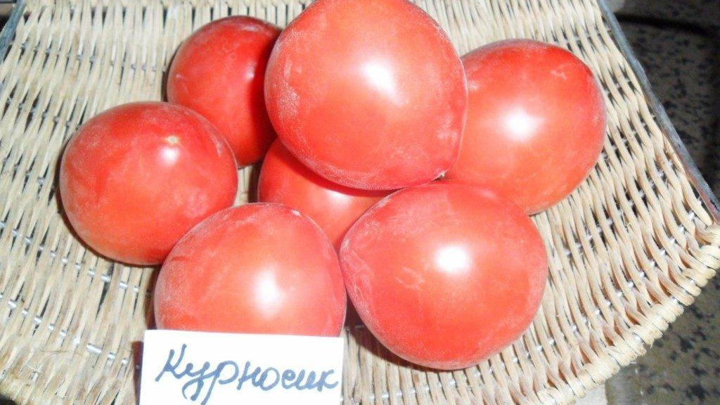 помидоры Курносик фото спелых плодов