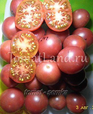 томат псамафа описание