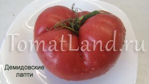 томат демидовские лапти