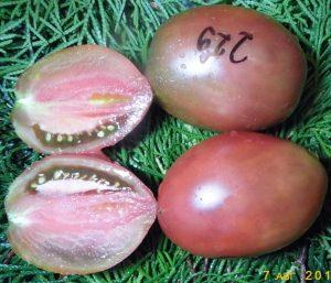 томат фиолетовый русский