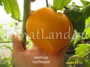 томат гребешки желтые