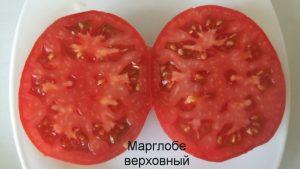 томат марглоб