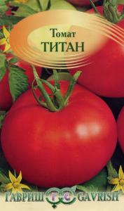 томат титан фото