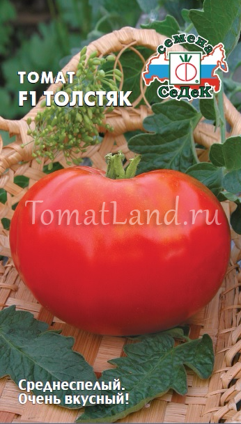 томат Толстяк фото