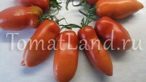 перцевидный томат