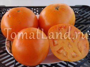 томат Оранжевый бочонок