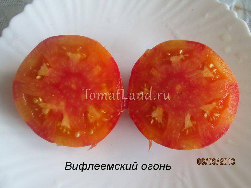 помидоры Вифлеемский огонь