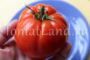 помидоры академик сахаров фото