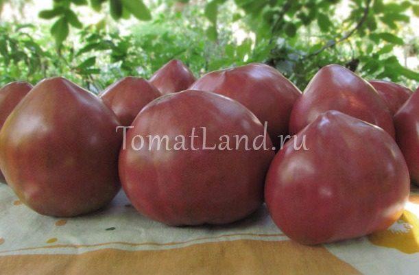 помидоры Чероки фиолетовое сердце
