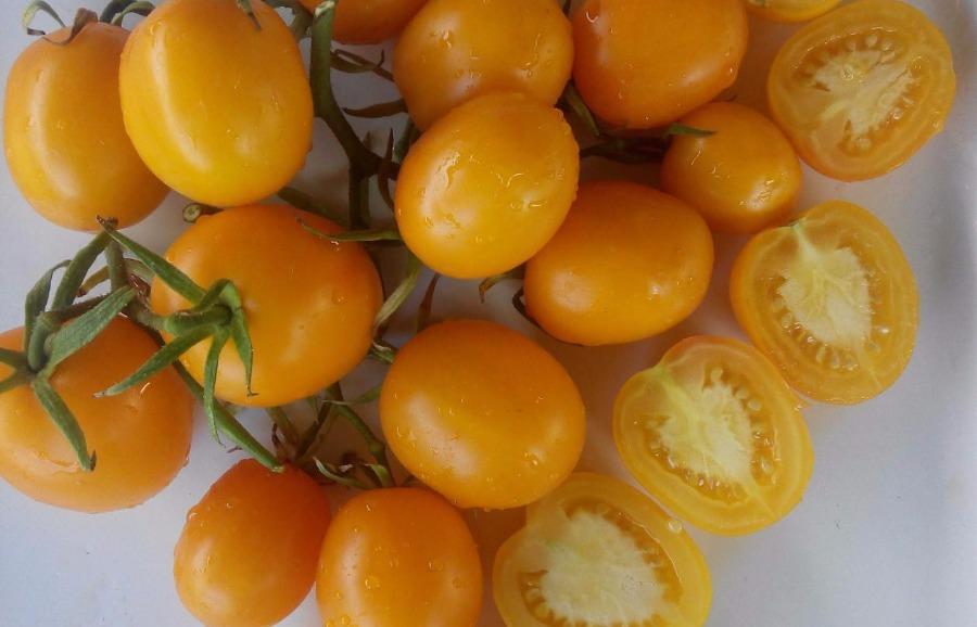 помидоры де барао золотой фото