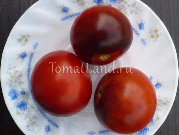 помидоры полуночный выбор фото