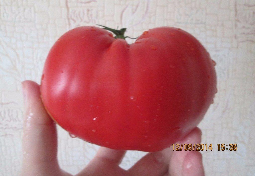 помидоры Мон-де-Maрац фото