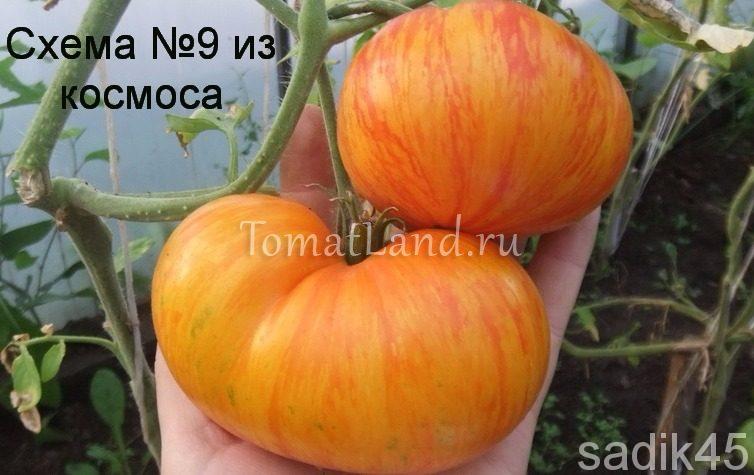 помидоры план 9 открытого космоса