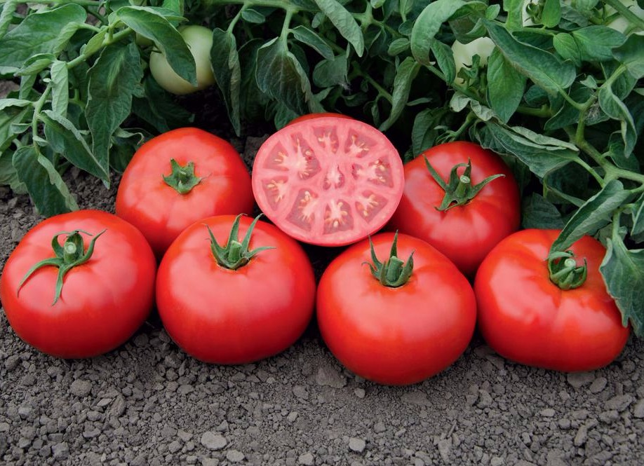томаты Томск фото спелых плодов