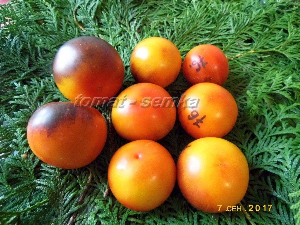 помидоры Синий ананас