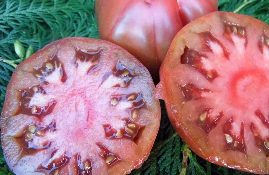 томаты варшава фото в разрезе