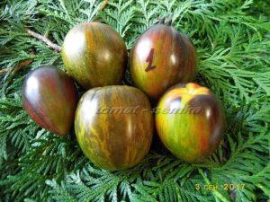 помидоры атомный виноград брэда фото