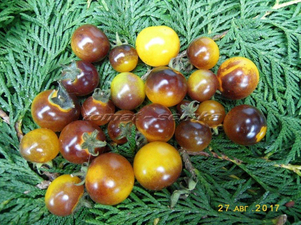 помидоры сине-золотые ягоды фото
