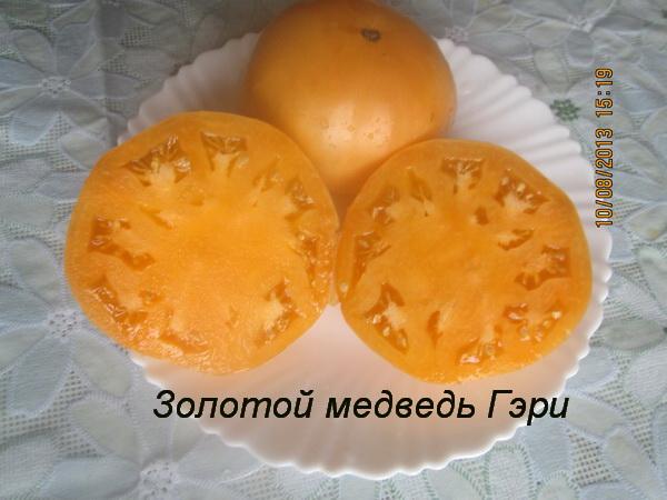 помидоры золотой медведь Гэри фото
